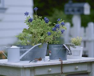 テーブルの上の鉢植とジョウロの写真素材 [FYI03858695]