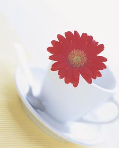 コーヒーカップに載せた赤いガーベラの写真素材 [FYI03858710]