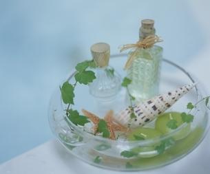 バスタブに置かれた器の小物と植物の写真素材 [FYI03858782]