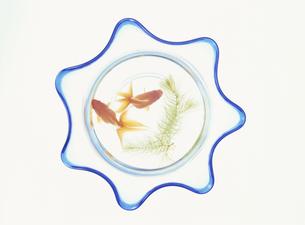 金魚鉢の写真素材 [FYI03858827]