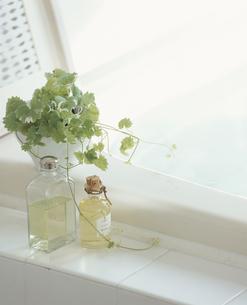 マッサージオイルとグリーンの写真素材 [FYI03858857]
