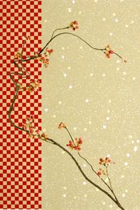 枝の写真素材 [FYI03859023]