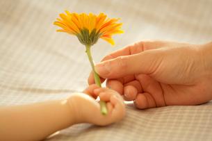 花を持つ母親と赤ちゃんの手の写真素材 [FYI03859033]