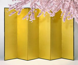 金屏風と桜の写真素材 [FYI03859084]