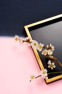 盆に置かれた白梅の花の写真素材 [FYI03859117]
