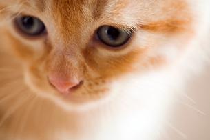 下を向く猫の写真素材 [FYI03859234]