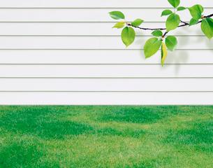 芝生と白い壁と枝の写真素材 [FYI03859485]