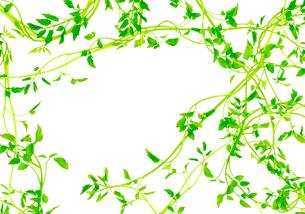 緑のフレームの写真素材 [FYI03859513]