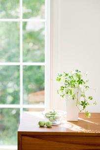 窓辺のグリーンと青リンゴの写真素材 [FYI03859691]