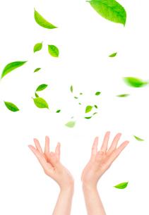 手と風に舞う葉の写真素材 [FYI03860023]