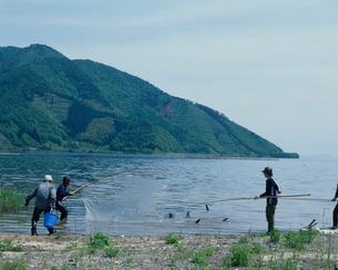 稚アユ釣り 琵琶湖の写真素材 [FYI03860437]