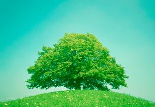 丘の大樹の写真素材 [FYI03860463]