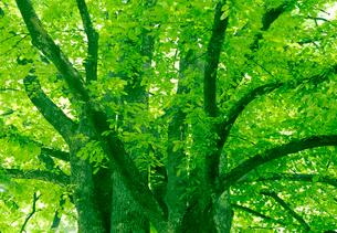 新緑の写真素材 [FYI03860464]