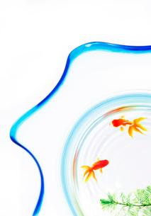 金魚鉢の写真素材 [FYI03860834]