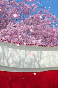桜と紅白の幕の写真素材 [FYI03860836]