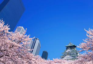 桜と大阪城とビジネスパークビル群の写真素材 [FYI03861114]