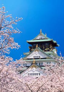 桜と青空に大阪城の写真素材 [FYI03861121]