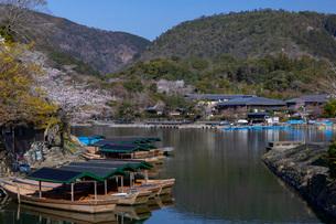 嵐山小倉山と桜の写真素材 [FYI03861204]