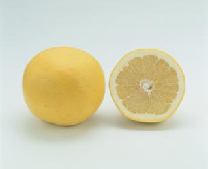 2個のグレープフルーツの写真素材 [FYI03861600]