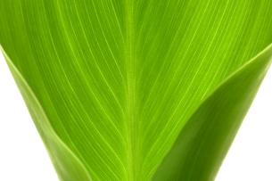 葉の写真素材 [FYI03861916]