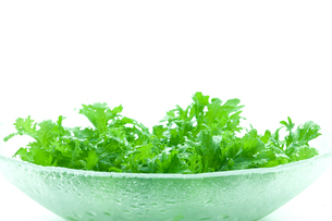 グリーンサラダの写真素材 [FYI03862056]