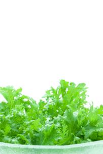 グリーンサラダの写真素材 [FYI03862061]