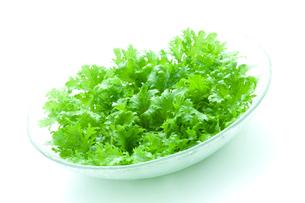 グリーンサラダの写真素材 [FYI03862062]
