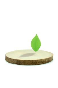 切り株と葉のイラスト素材 [FYI03862160]