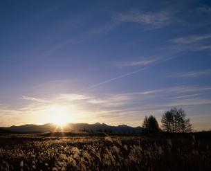 朝の八ヶ岳のススキ原の高原 霧ケ峰高原 長野県の写真素材 [FYI03862198]