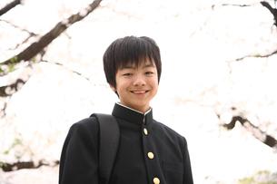 桜と男子中学生の写真素材 [FYI03863869]