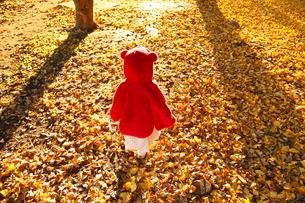銀杏のじゅうたんで遊ぶ女の子の写真素材 [FYI03863968]