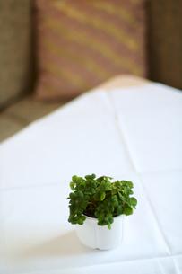 食卓の写真素材 [FYI03867640]