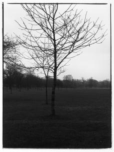 木が立つ風景 B/W ロンドン イギリスの写真素材 [FYI03867676]