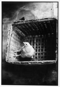 かごに入った鳥 B/W 香港の写真素材 [FYI03867677]