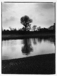 木が立っている池 B/W ロンドン イギリスの写真素材 [FYI03867678]