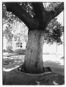 都市に立つ樹木 B/W トルコの写真素材 [FYI03867697]