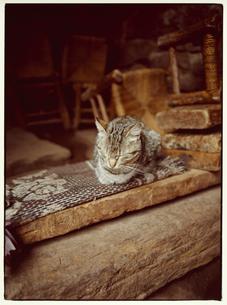 居眠りするネコの写真素材 [FYI03867708]