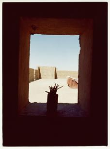 窓辺の植木のシルエットの写真素材 [FYI03867718]