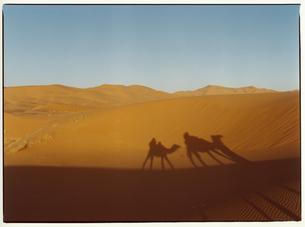 砂に映るラクダに乗った人物の影 サハラ砂漠 モロッコの写真素材 [FYI03867732]