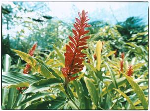 植物の写真素材 [FYI03867739]