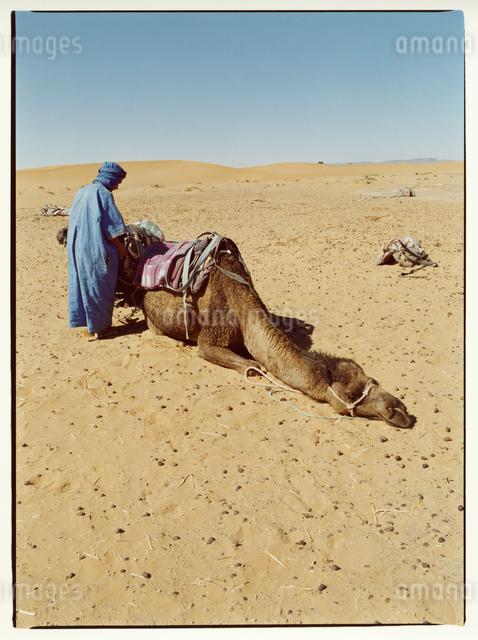 サハラ砂漠に伏せるラクダと外国人の男性 モロッコの写真素材 [FYI03867754]