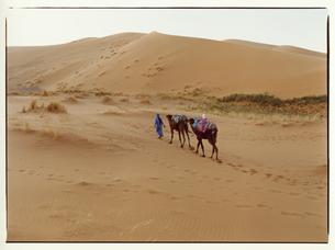 サハラ砂漠を歩くラクダと外国人男性 モロッコの写真素材 [FYI03867759]