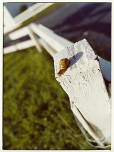 柱のカタツムリの写真素材 [FYI03867767]
