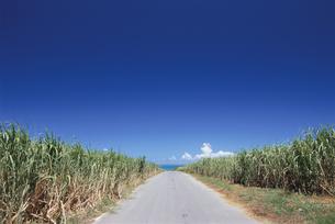 サトウキビ畑と小道 小浜島 沖縄県の写真素材 [FYI03868061]