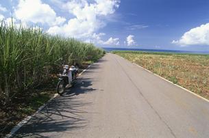 海へ続く道とさとうきび畑の写真素材 [FYI03868152]