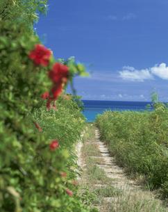 海へと続くハイビスカスが咲く道の写真素材 [FYI03868265]