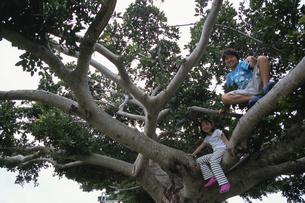 木登りをする男の子と女の子の写真素材 [FYI03868440]