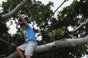 木登りをする男の子の写真素材 [FYI03868442]
