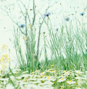 野に咲く花の写真素材 [FYI03869278]