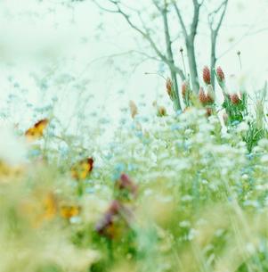 野に咲く花の写真素材 [FYI03869280]